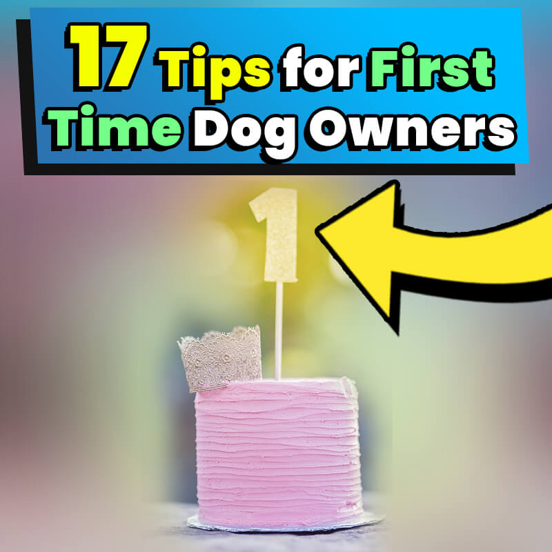 17 tips for first time dog owners