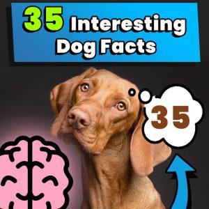 35 Interesting Dog Facts