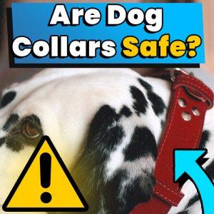 Are Dog Collars Safe