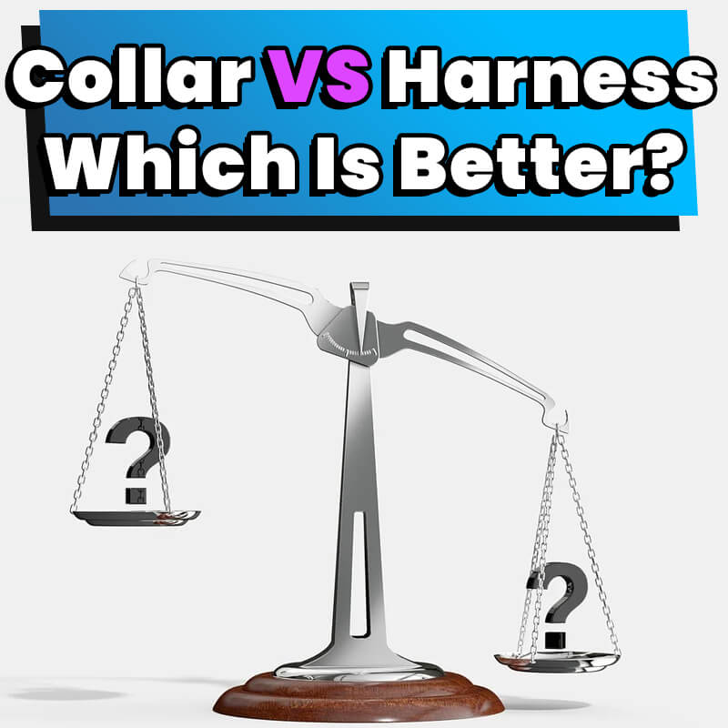 Collar Vs Harness Which Is Better