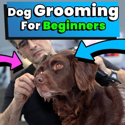 Dog Grooming For Beginners At Home