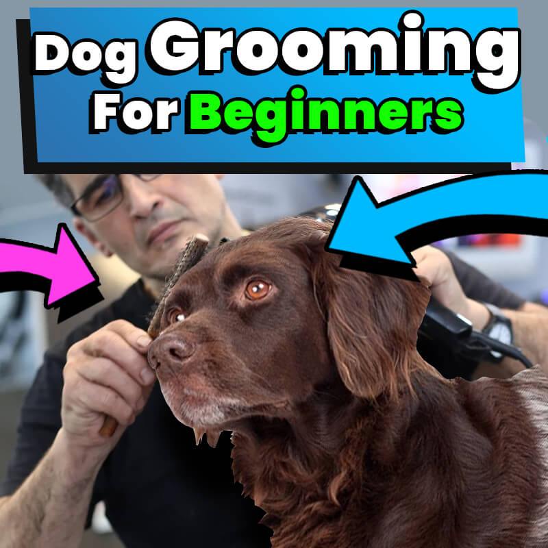Dog Grooming For Beginners At Home 2