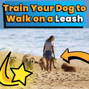 How to Train Your Dog to Walk on a Leash 2