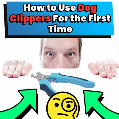 How to Use Dog Clippers For the First Time