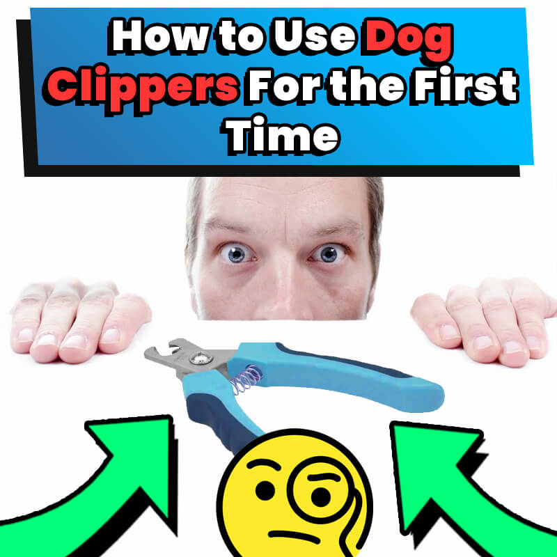 using dog clippers for the first time