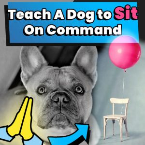 Teach A Dog to Sit On Command