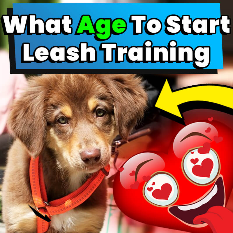 What Age To Start Leash Training