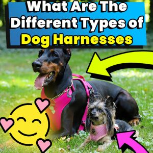 What Are The Different Types of Dog Harnesses 2