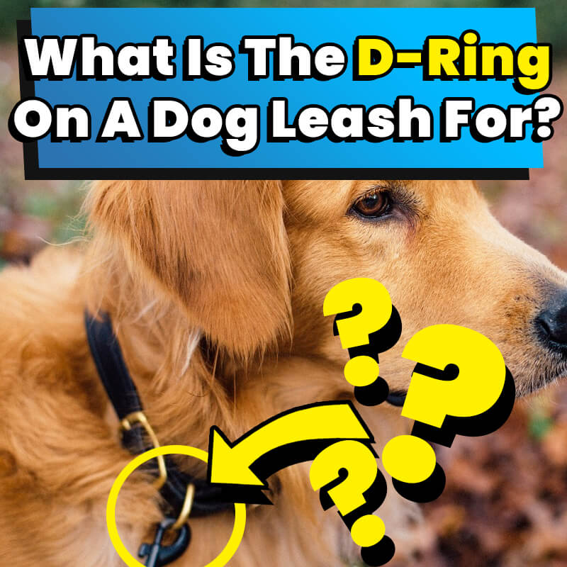 What Is The D-Ring On A Dog Leash For
