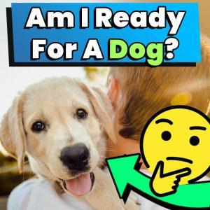 am i ready for a dog