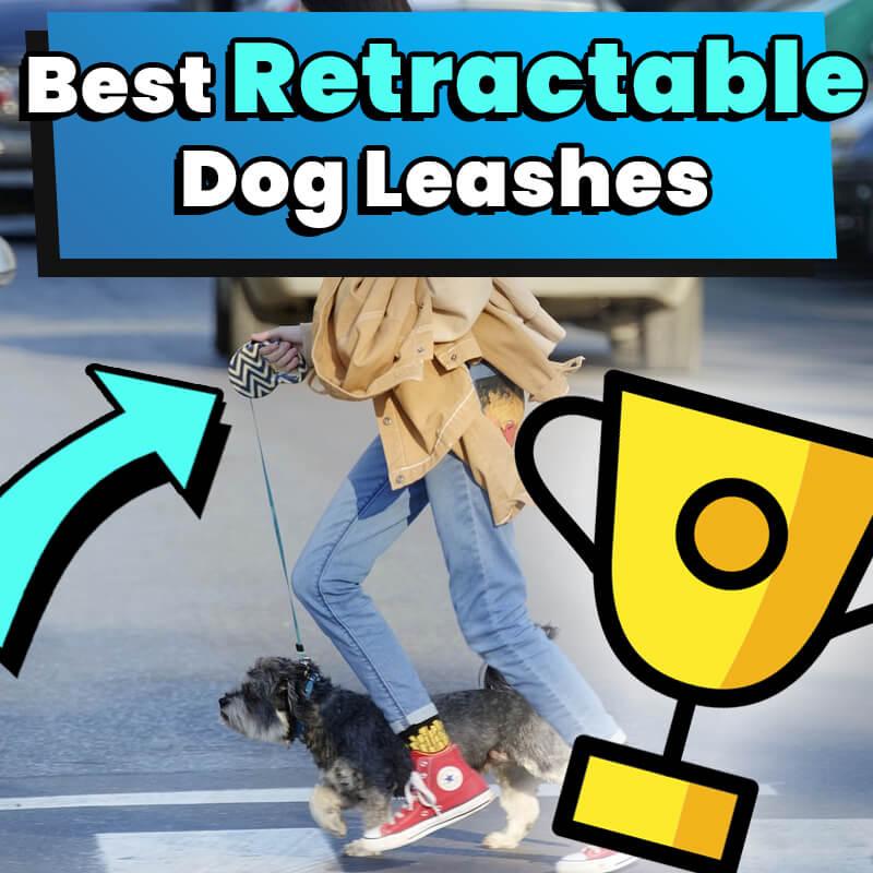 best retractable dog leash