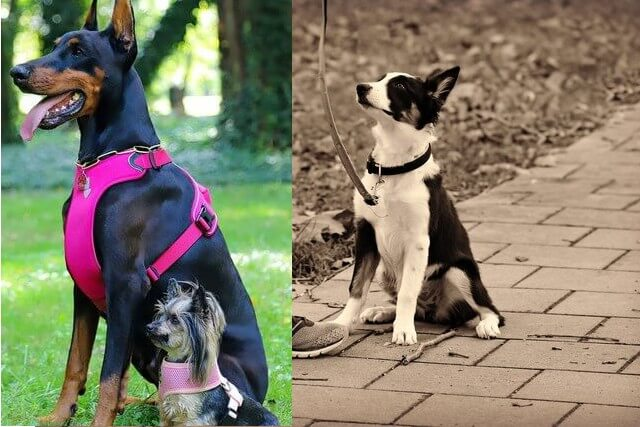 collar vs. harness which is better