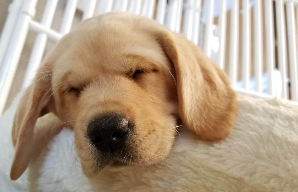 strongest dog sense dogs sense of smell