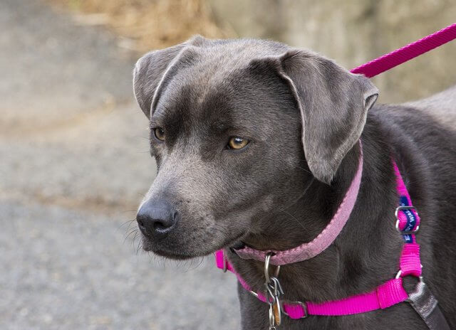 what are the different types of dog harnesses