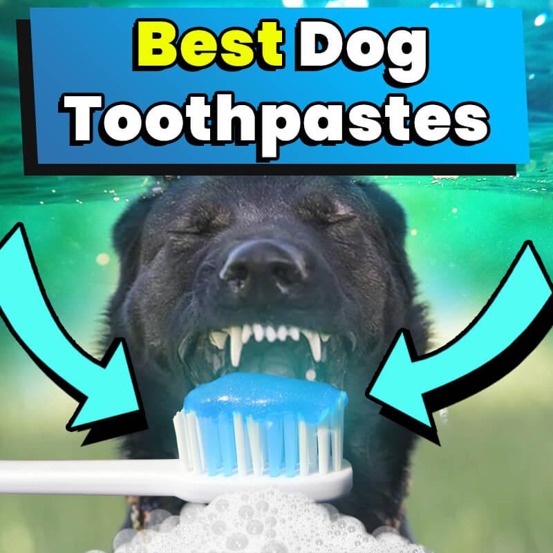 Best Dog Toothpastes
