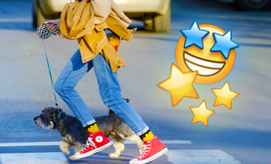 The 27 Best Retractable Dog Leashes of 2021