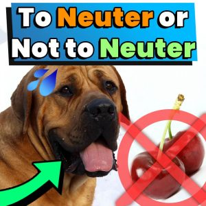 To Neuter or Not to Neuter