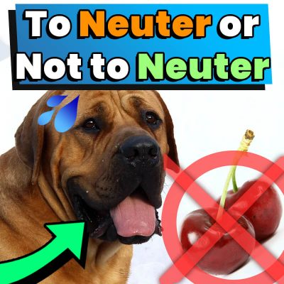 To Neuter or Not