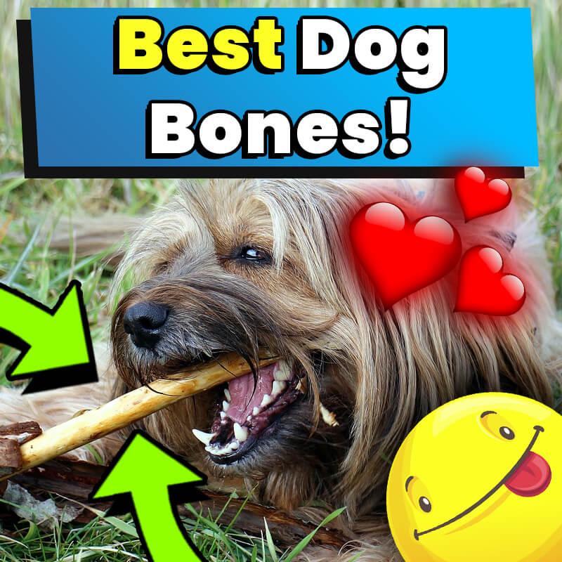 Best Dog Bones