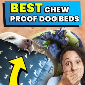 best-chew-proof-dog-beds