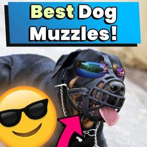 best-dog-muzzles