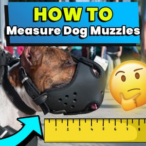 how to measure a dog muzzle