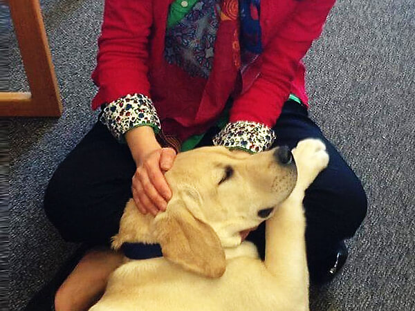 petting-a-dog-to-reduce-stress