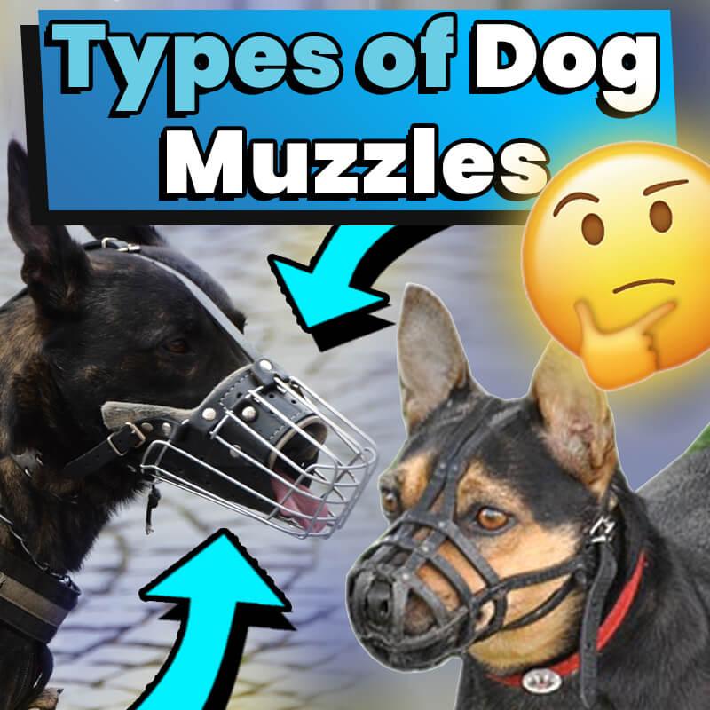 types-of-dog-muzzles