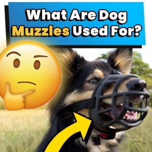what are dog muzzles used for