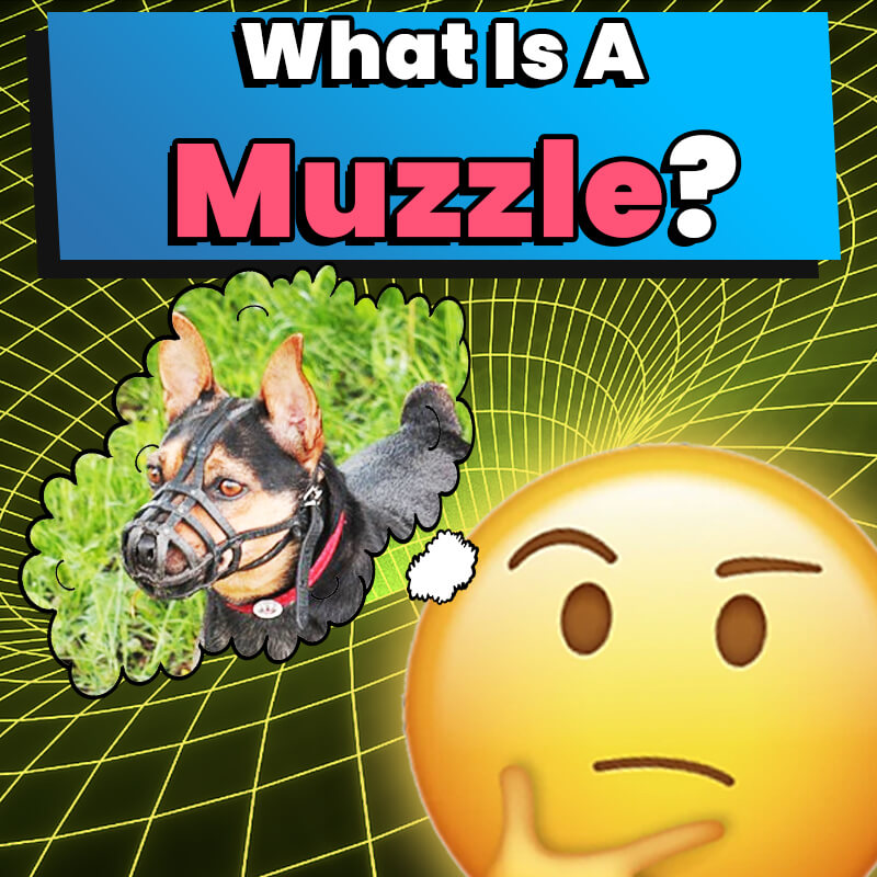 what is a muzzle