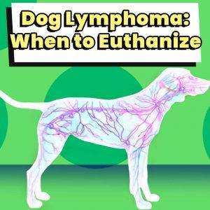 Dog Lymphoma When to Euthanize