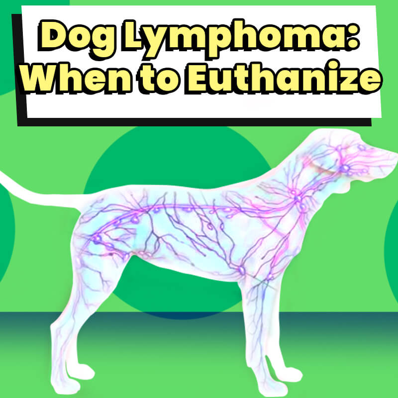 Dog Lymphoma When to Euthanize