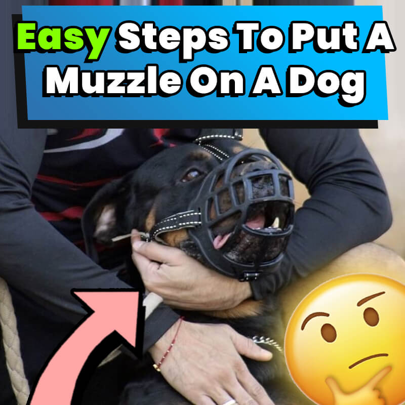 Easy Steps To Put A Muzzle On A Dog
