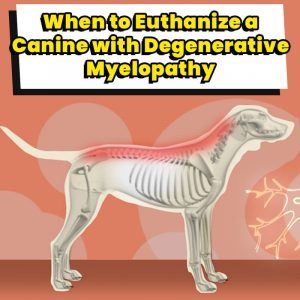 When to Euthanize a Canine with Degenerative Myelopathy