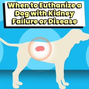 When to Euthanize a Dog with Kidney Failure or Disease