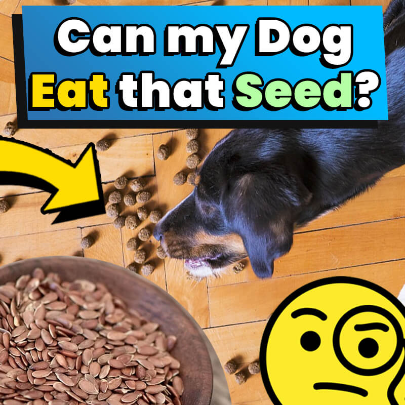 can-my-dog-eat-that-seed
