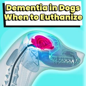 dementia-in-dogs-when-to-euthanize