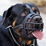 puppy muzzles