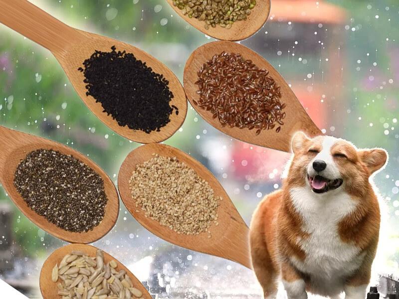 should I feed seeds to my dog?