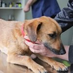 treatment for lymphoma in dogs