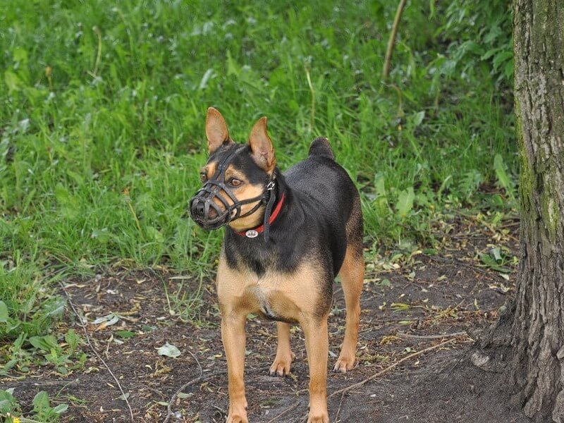 What Are Dog Muzzles Used For basket muzzle