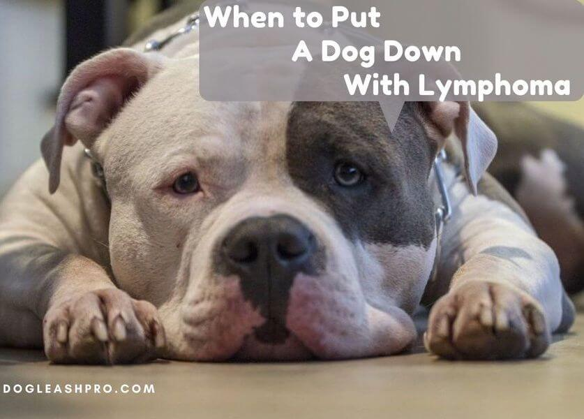 when is it time to put your dog down with lymphoma