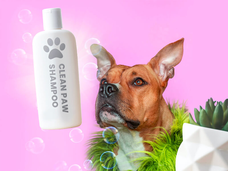 dog looking excitedly at dog shampoo