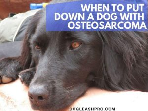 what is the right time to euthanize a dog with osteosarcoma