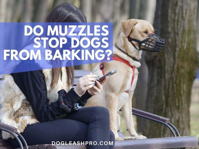 Do Muzzles Stop Dogs From Barking