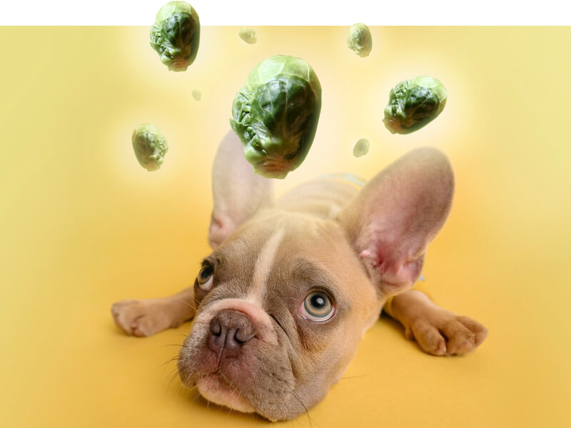 Can Dogs Eat Brussel Sprouts?
