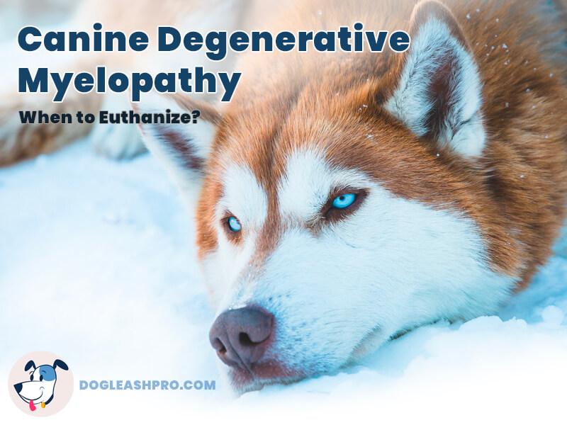 canine-degenerative-myelopathy when to euthanize