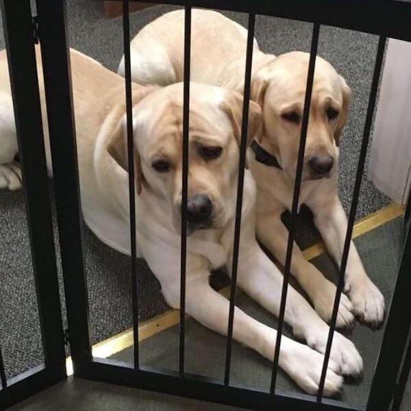 retractable dog gate