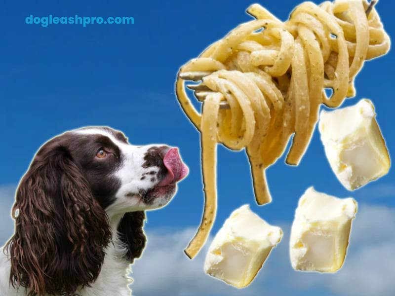 Can Dogs Eat Alfredo