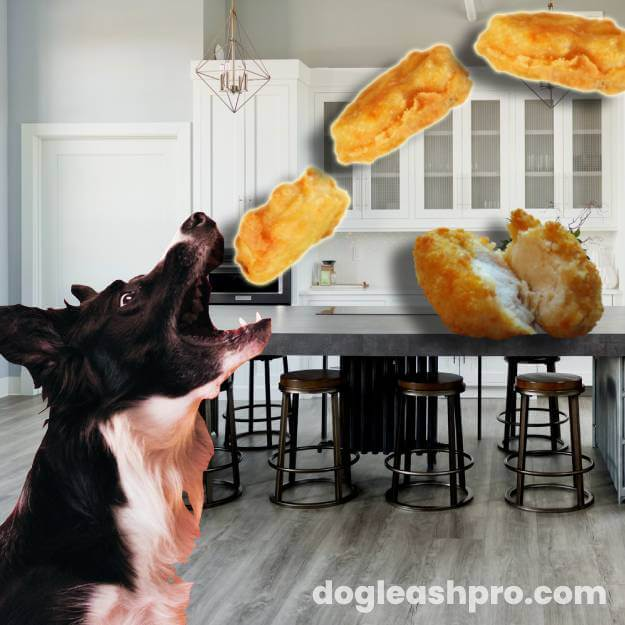 Can Dogs Eat Chicken Nuggets